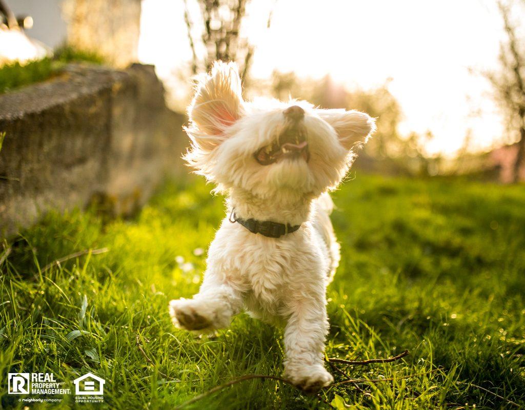 快乐活泼的马耳他狗在大自然中玩耍