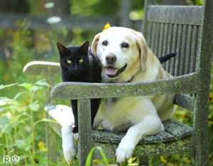 Adorable Cat and Dog Relaxing in a Pet-Friendly Garden