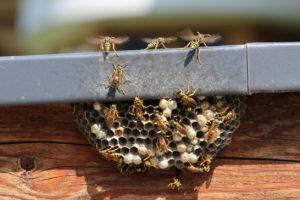 Alpharetta Wasp Nest on Home Exterior