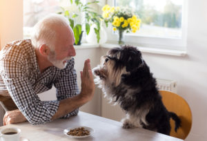 Cute dog giving five with paw to a senior man at dining table with food in small plate in front of him