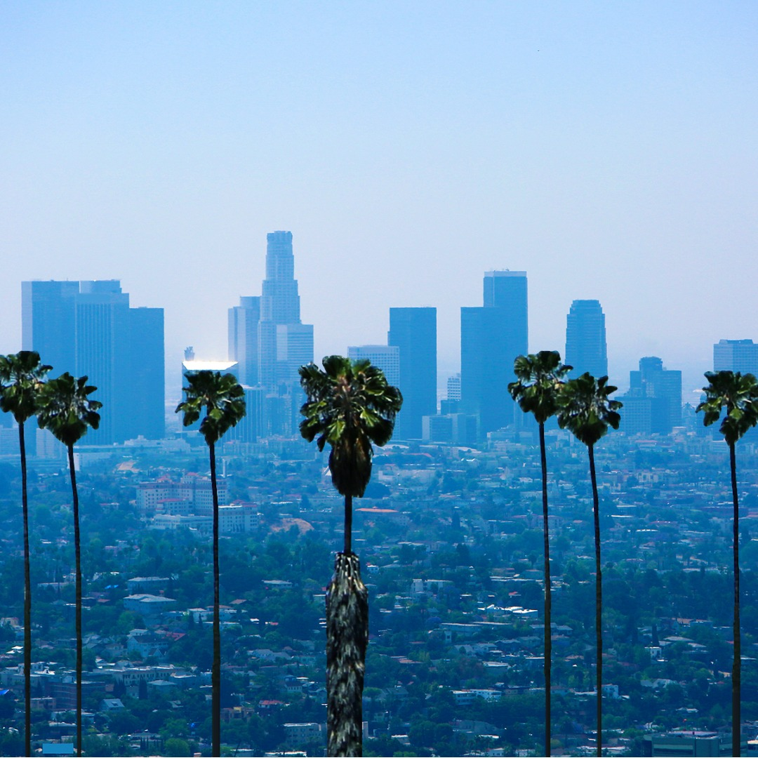 A View of Palm Trees against the Los Angeles Cityscape