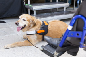 Falsifying Your Pet's Service Animal Certification