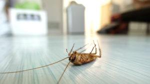 How to get rid of pests in your Home