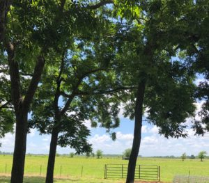 Choctaw Property Management