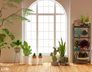 Healthy Green Houseplants in Front of a Window