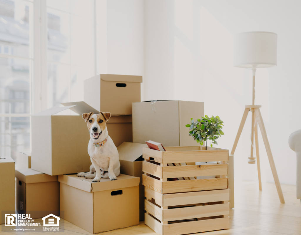 Hyrum Dog Sitting on Moving Boxes