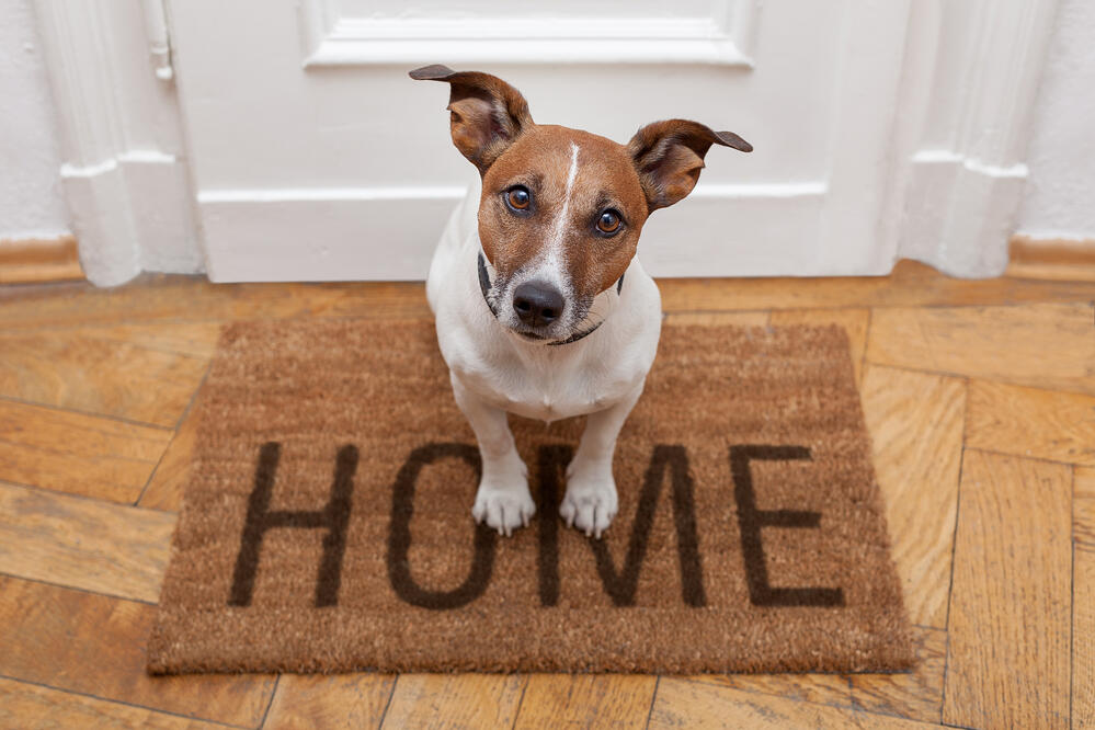 Dog on rug with home written