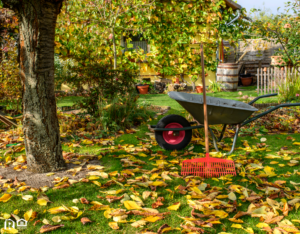 Wheelbarrow and Rake for Fall Yardwork