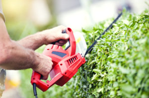 """man or someone with """"manish hands"""" trimming a hedge with electric trimmer"""