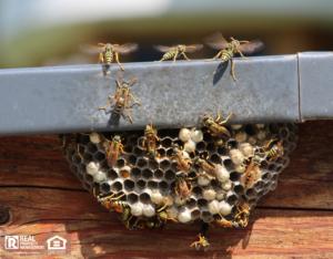 Grandville Wasp Nest on Home Exterior
