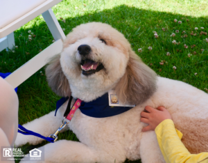 Therapy Dogs on sidewalk receiving attention from passersby