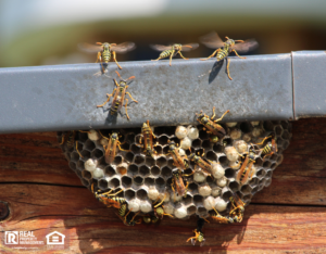 Cary Wasp Nest on Home Exterior