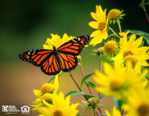 Butterfly in a Fuquay-Varina Rental Property Yard