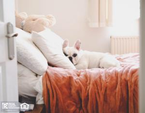 White French Bulldog Sleeping on Bed in Macon Rental