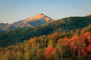 Early Autumn in the Wasatch Mountains, Utah, USA