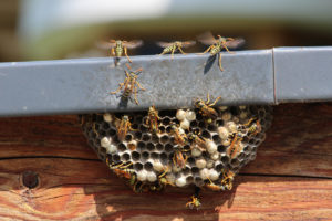 Tooele Wasp Nest on Home Exterior