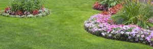 Rental Home Lawn Care
