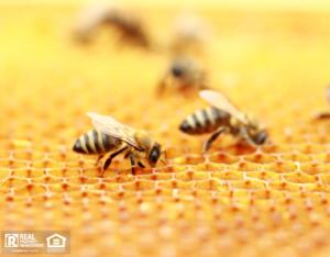 Closeup of Honeybees on Hive