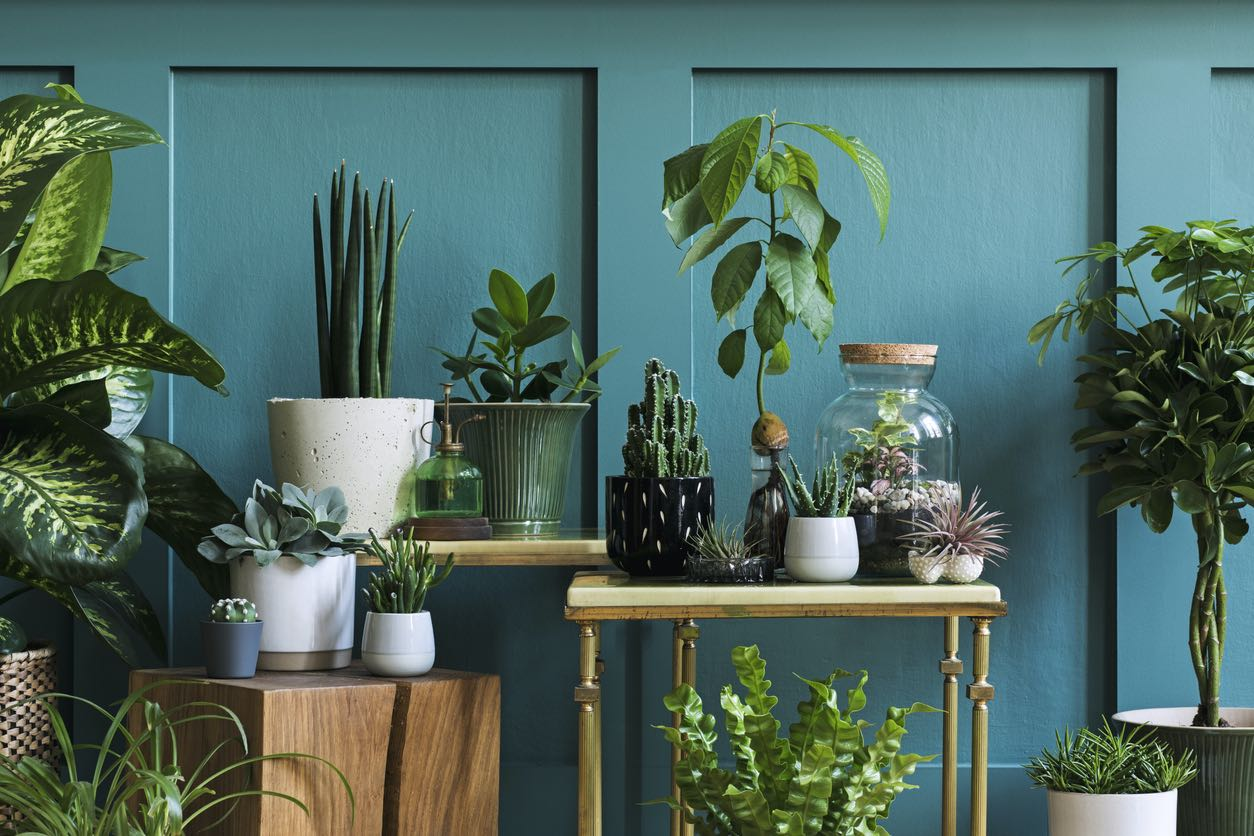 Malvern Living Room Filled with a Beautiful Indoor Garden