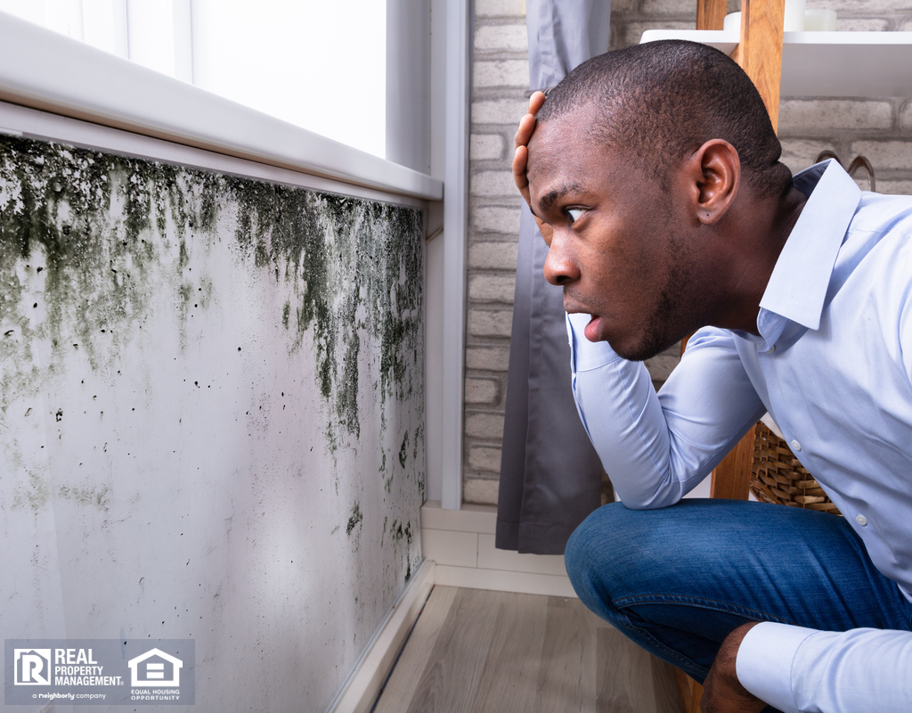 Location Tenant Looking at Mold in His Rental Home