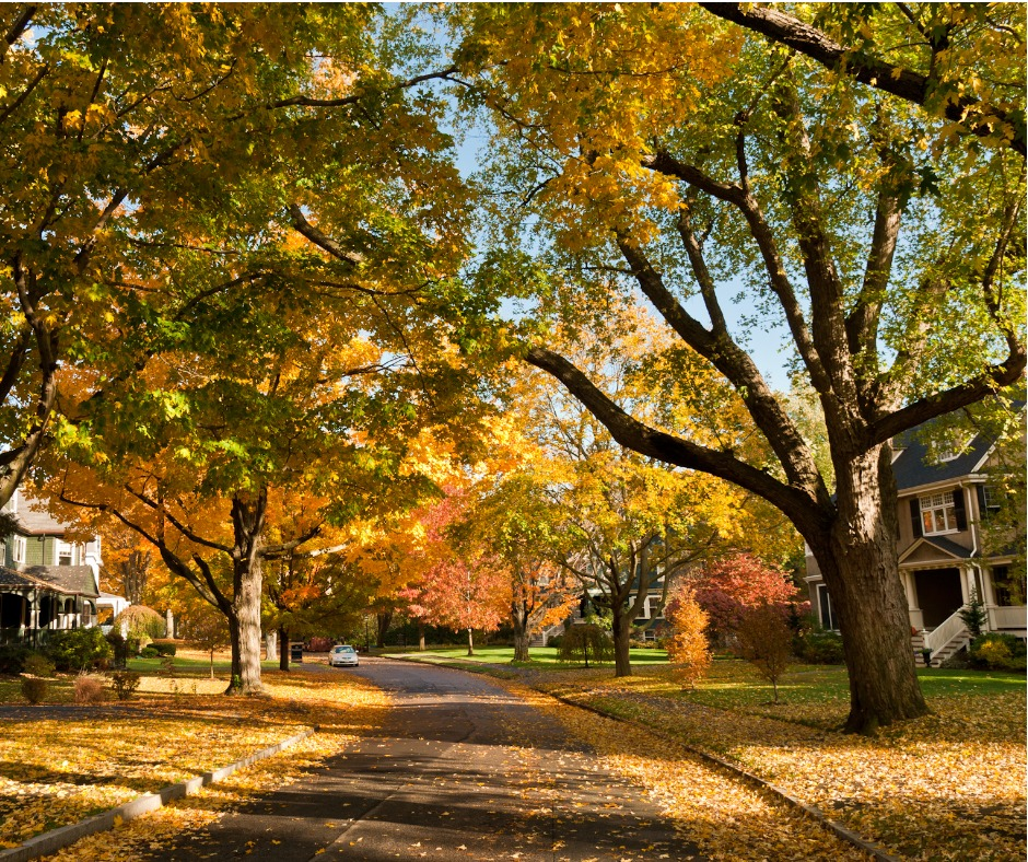 Fall Leaves on a Residential Street in Massachusetts