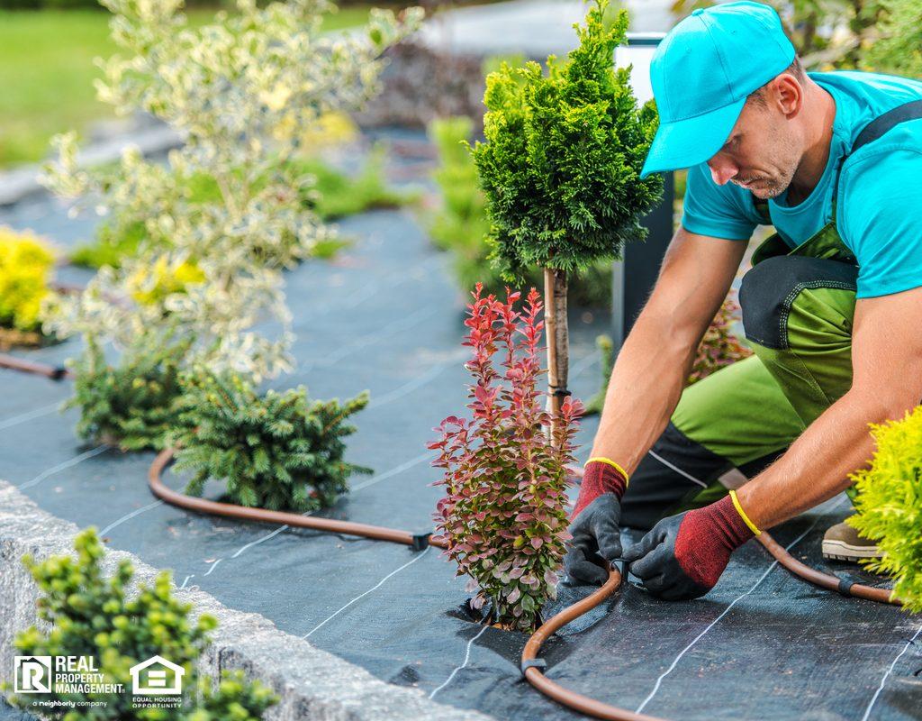 Professional Installing Irrigation System in Xeriscape Garden