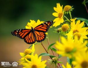 Butterfly in a Shaw Rental Property Yard