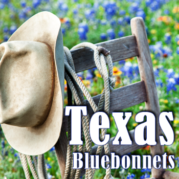 All About Texas Bluebonnets