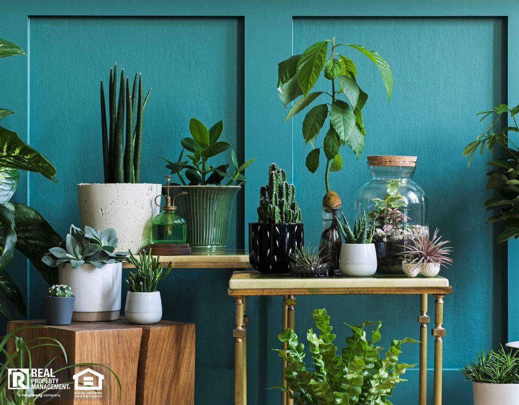McKinney Living Room Filled with a Beautiful Indoor Garden