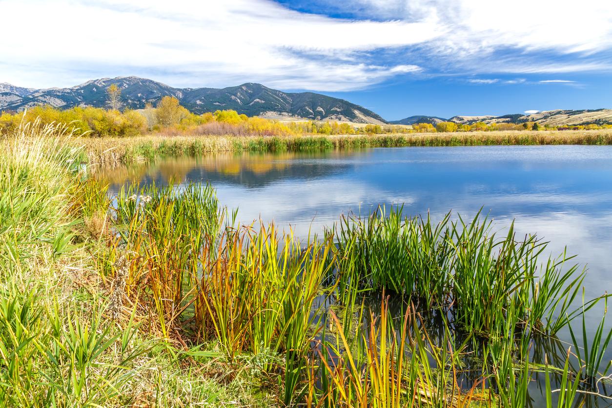 Montana Mountains and River
