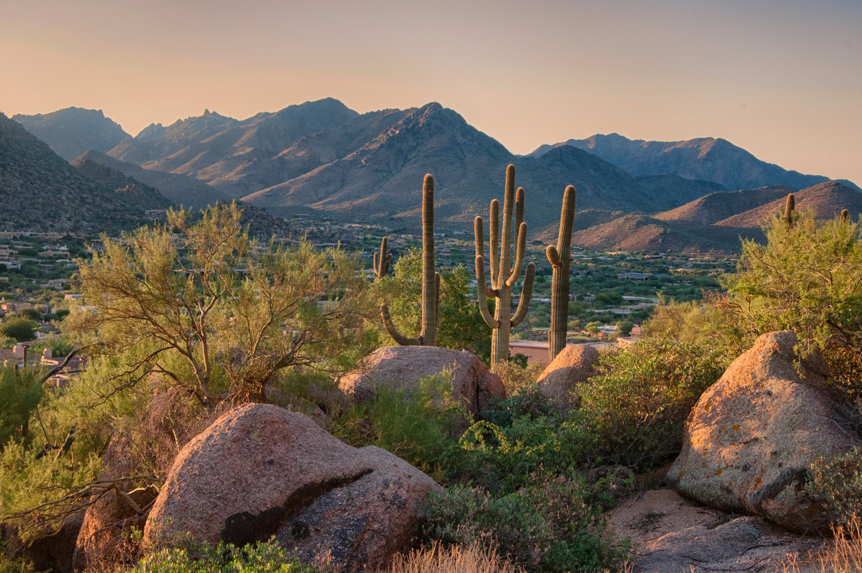 Cactus and Mountains in Arizona