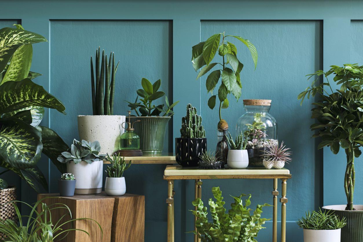 Watertown Living Room Filled with a Beautiful Indoor Garden