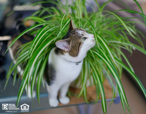 Indoor Cat Playing in a Spider Plant