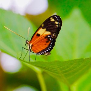 Butterfly perched on a green leaf in garden