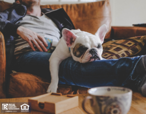 Wellington Tenant Spending a Lazy Afternoon with Their Dog