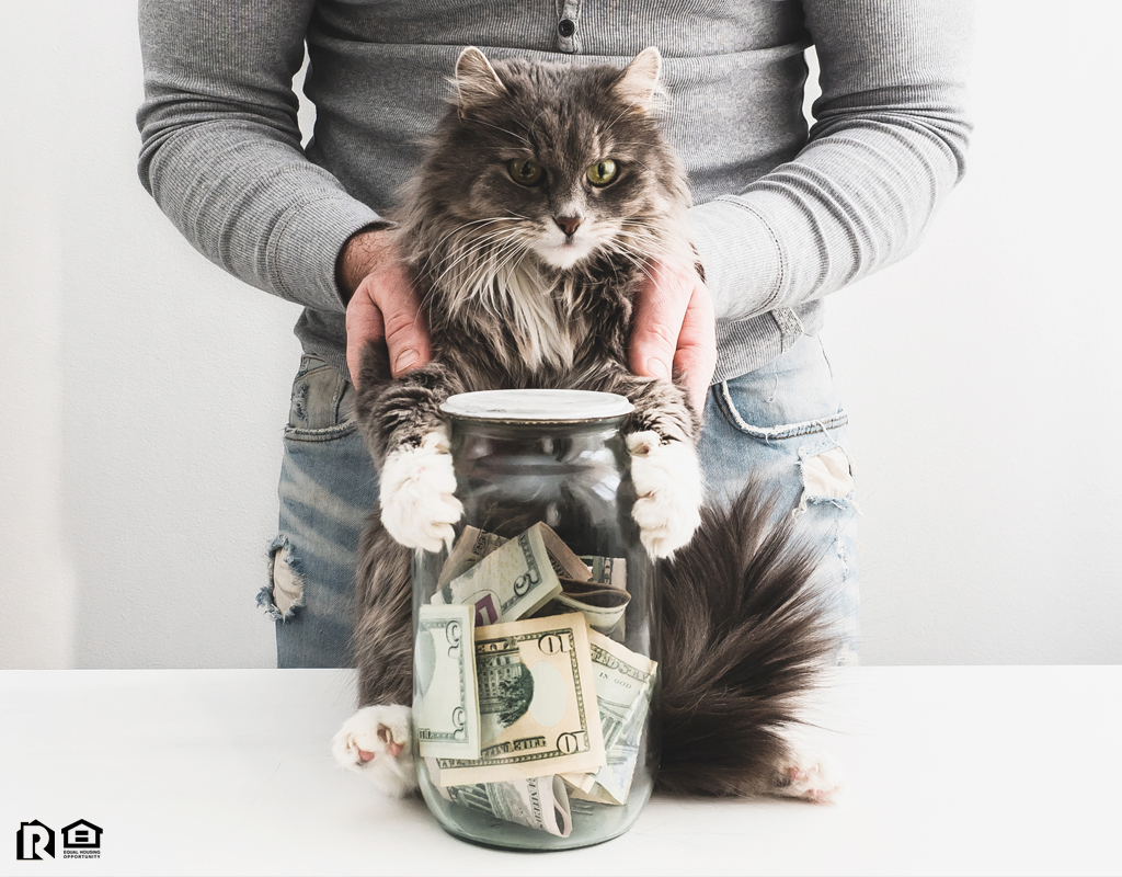 Kennesaw Tenant with a Piggy Bank and a Cute Cat