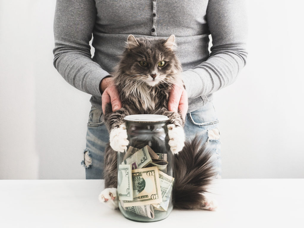 Man with a piggy bank in the form of a jar with money inside and a cute cat