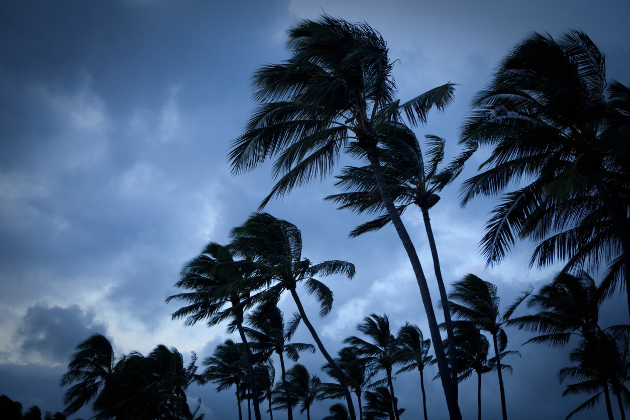 Palm trees in high wind with stormy sky in the background.