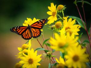 Butterfly in a Eastpointe Rental Property Yard