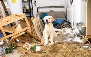 Pet Friendly Rental Property