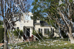 Jamaica Plains Rental Property with Toilet Paper in the Trees