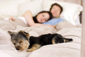 Allowing Pets Can Increase Rent Revenue For Richmond Investment Property Owners